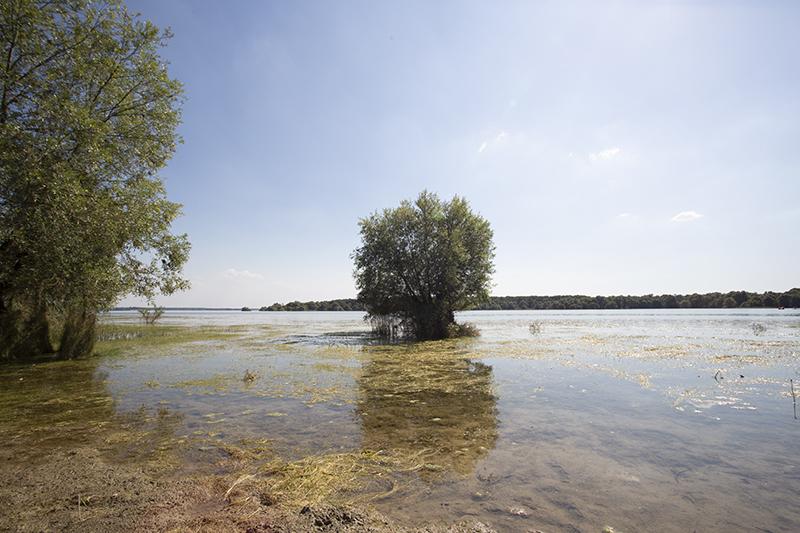 늪과 같았던 호수