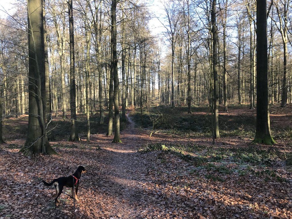 벨기에 어느 숲 속 정박지